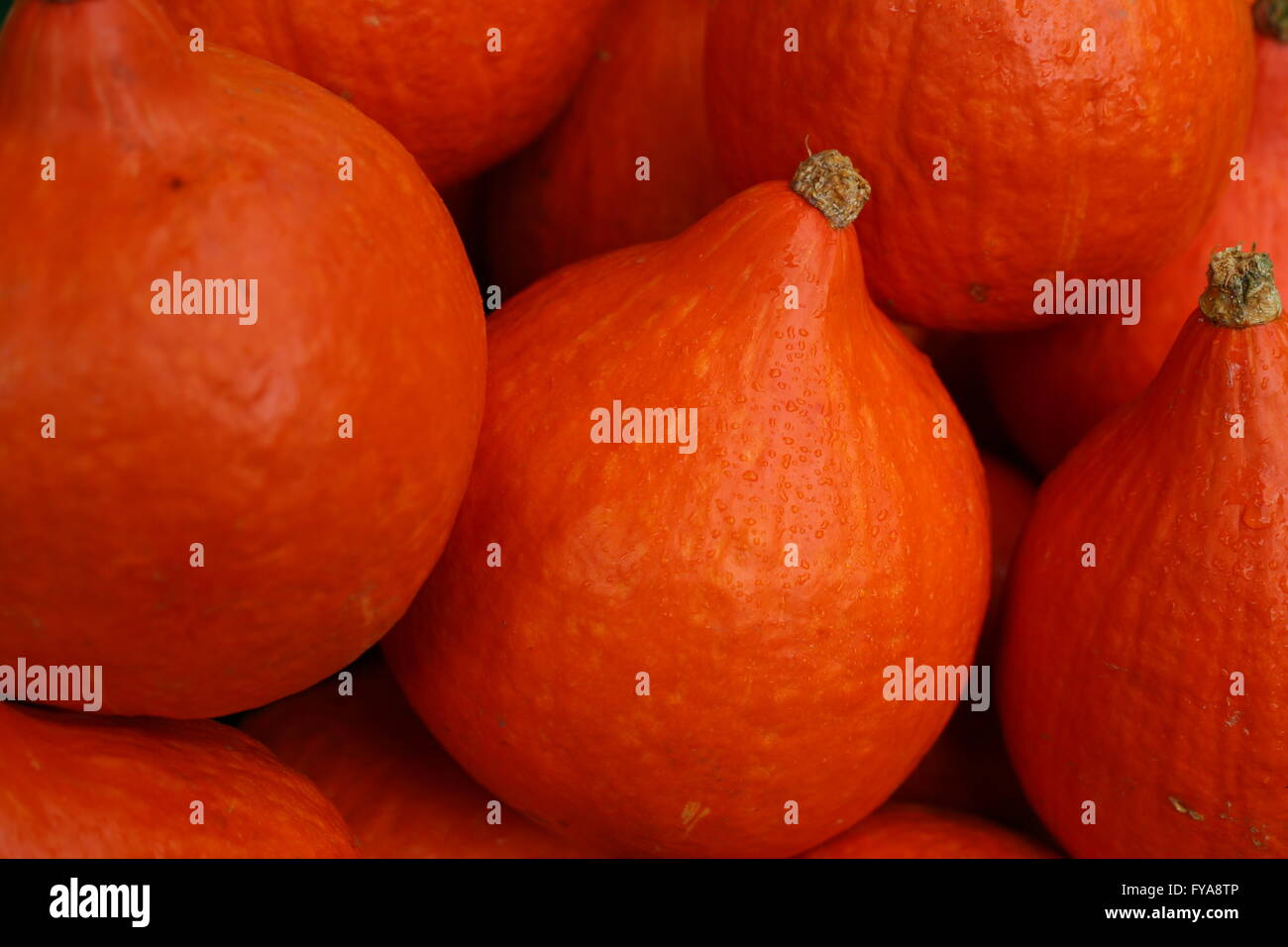 pumpkins on the market place in Bonn, Germany - Stock Image