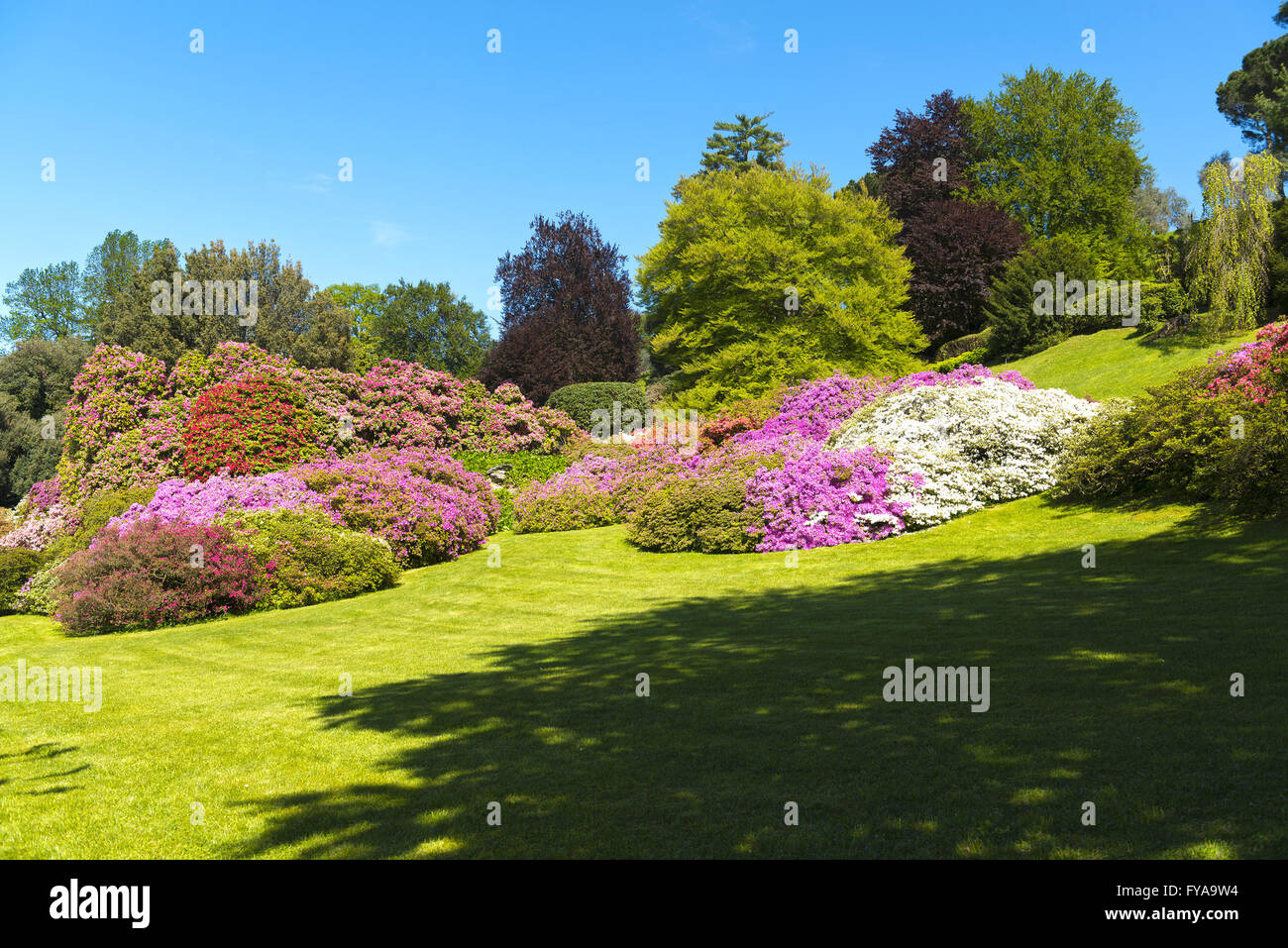 Landscape of gardens with trees and flowers of azalea in spring landscape of gardens with trees and flowers of azalea in spring season blue sky in background mightylinksfo Gallery