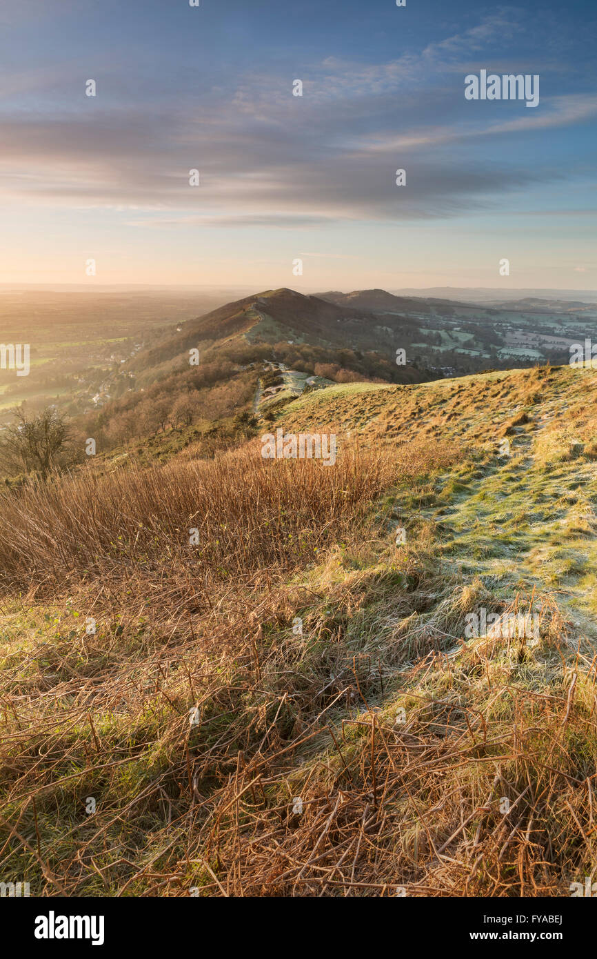Dead bracken on Summer Hill, Malvern, on a frosty Winter morning in Worcestershire, England Stock Photo