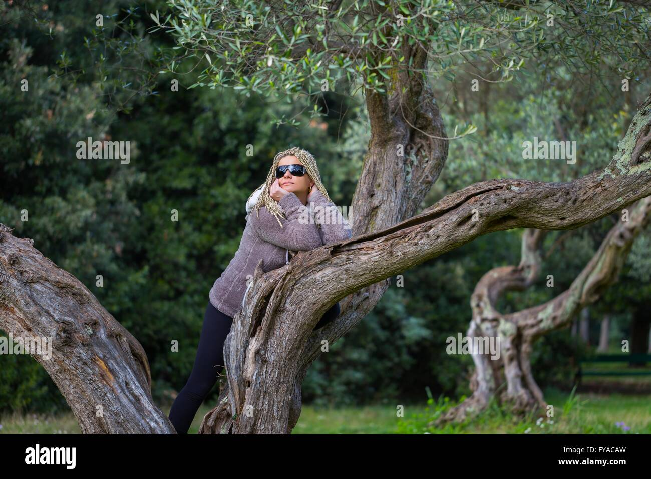 Woman with sunglasses on tree attractive beautiful single lying on belly stomach tummy on tree looking away apparently - Stock Image