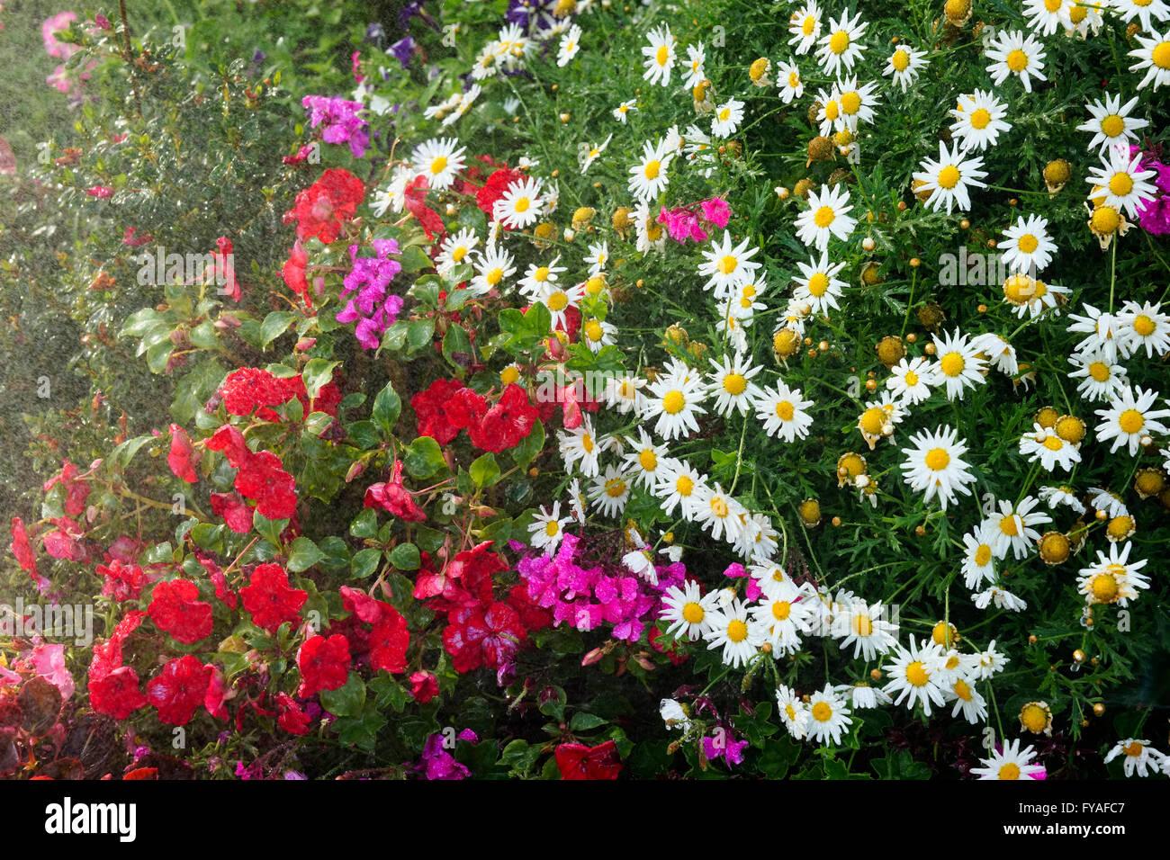 Cottage Garden Flowers And Flower Arrangements Gardening Australia
