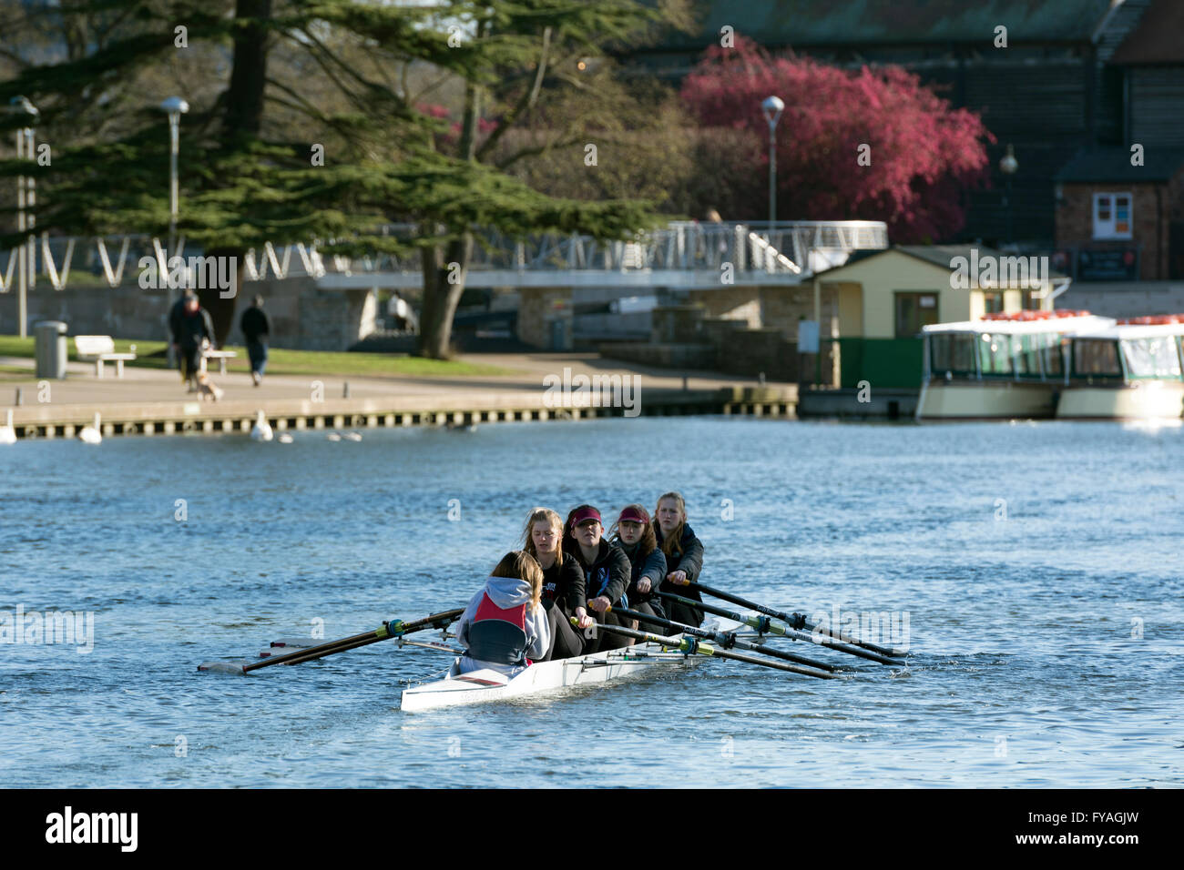 A women`s coxed four rowers training on the River Avon, Stratford-upon-Avon, UK - Stock Image