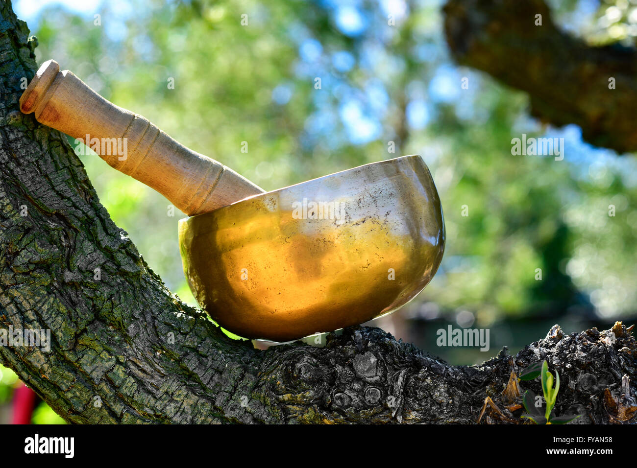 a tibetan singing bowl with its wooden mallet placed on the branch of a tree in a rural scene Stock Photo