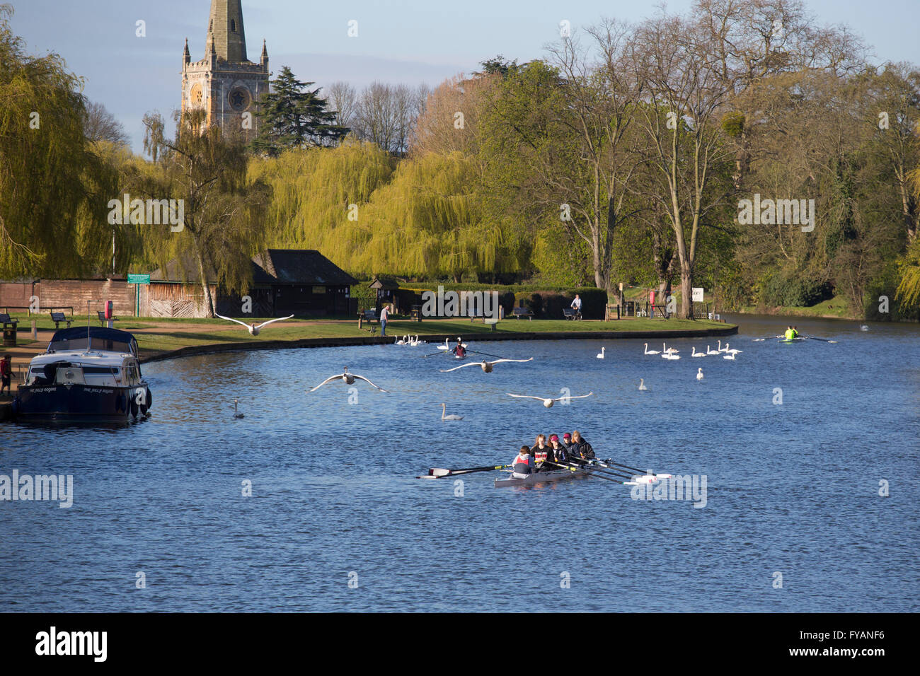 Rowers on the River Avon at Stratford-upon-Avon, UK - Stock Image