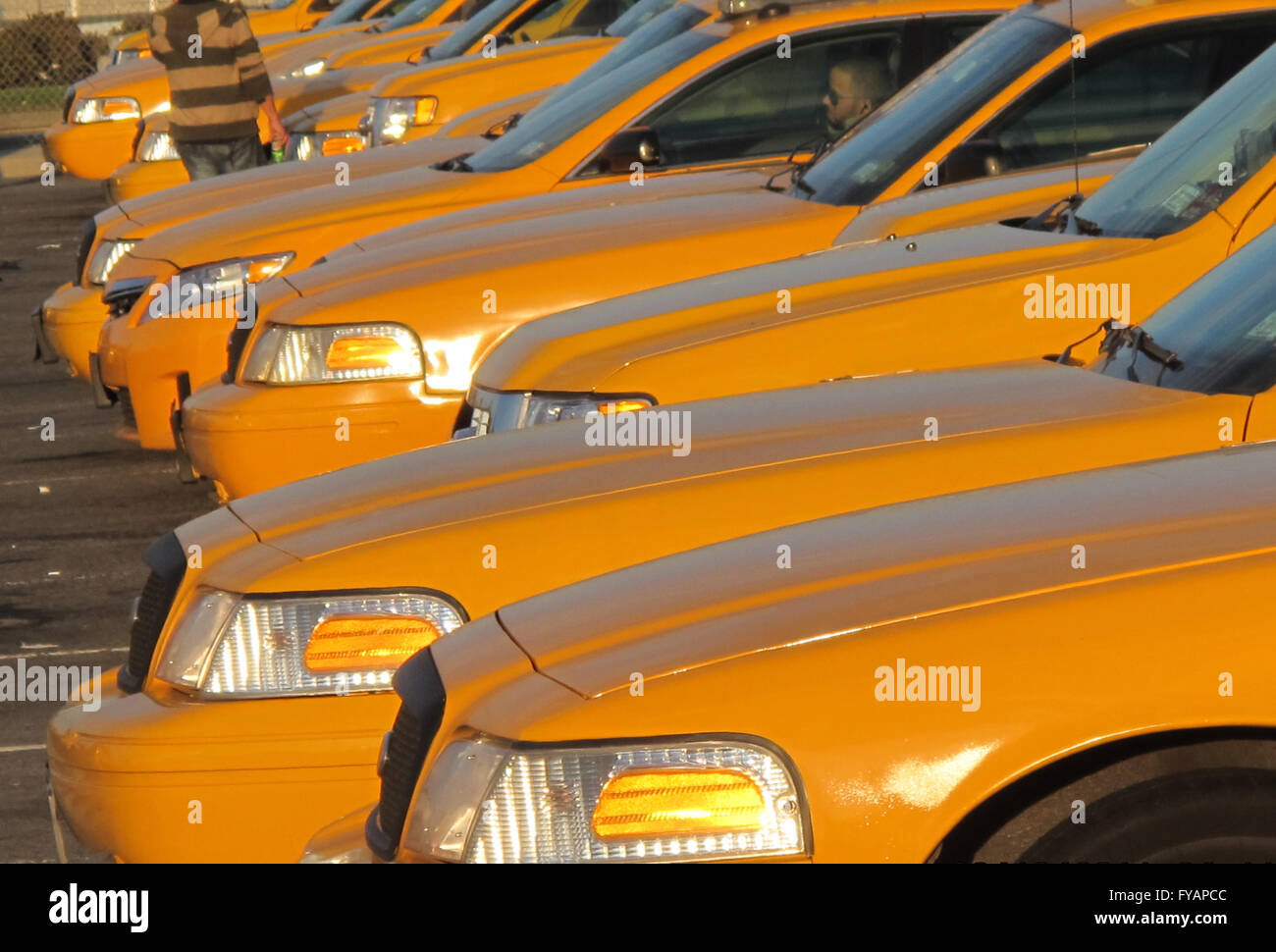 yellow cabs waiting in line at JFK' s Central Holding Lot waiting for their turn to go to terminals to pick - Stock Image
