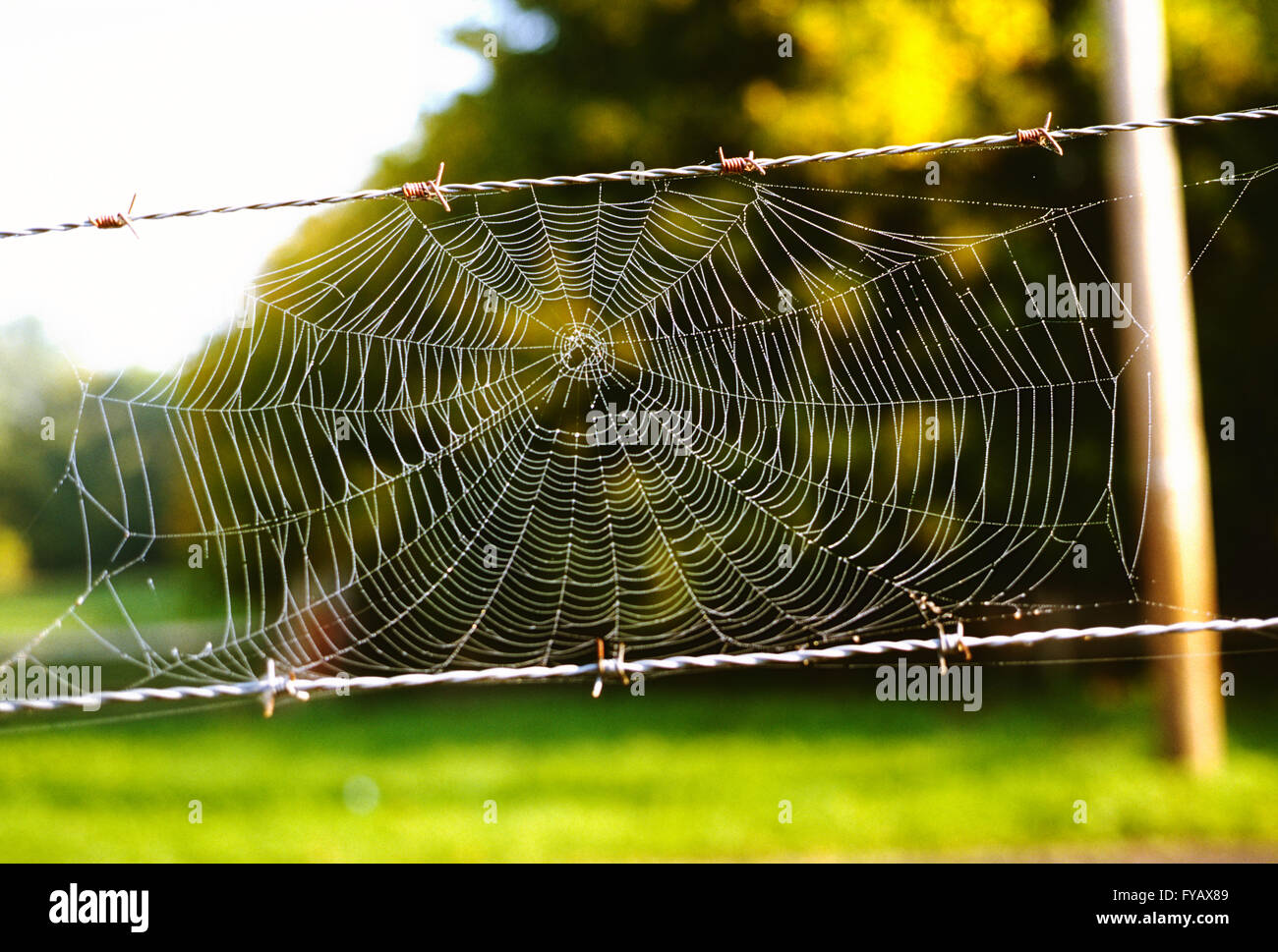 Intricate dew covered spider web in natural outdoor setting - Stock Image