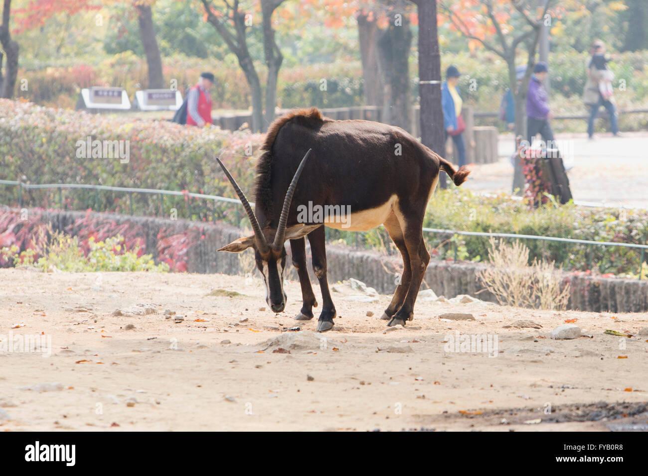 Animals 075 - Stock Image