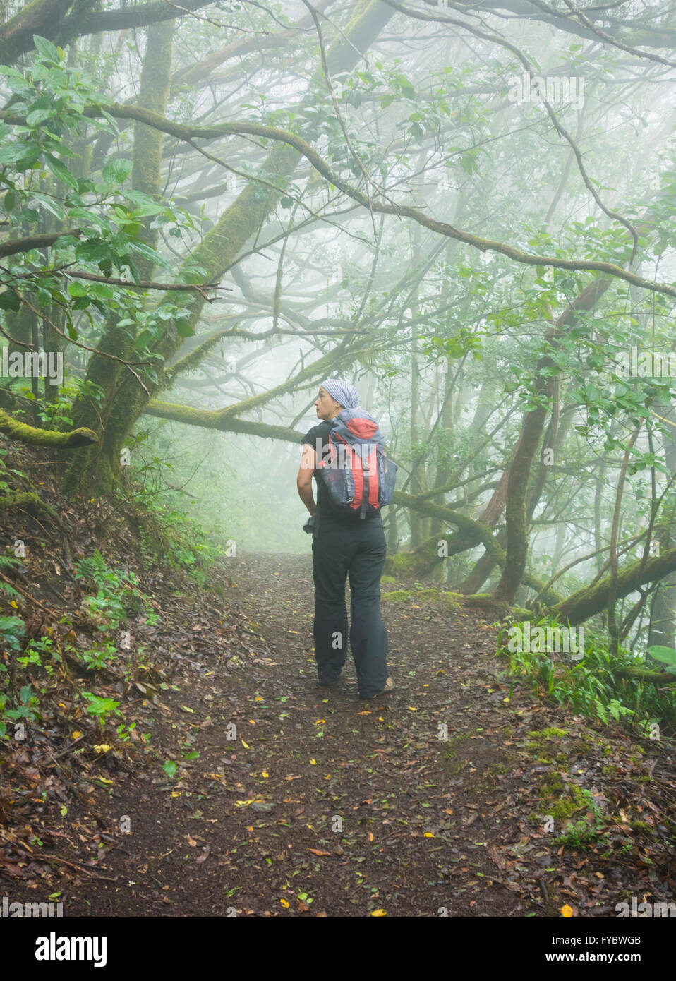 Female hiker in Laurisilva forest in Anaga Rural park on Tenerife, Canary Islands, Spain - Stock Image