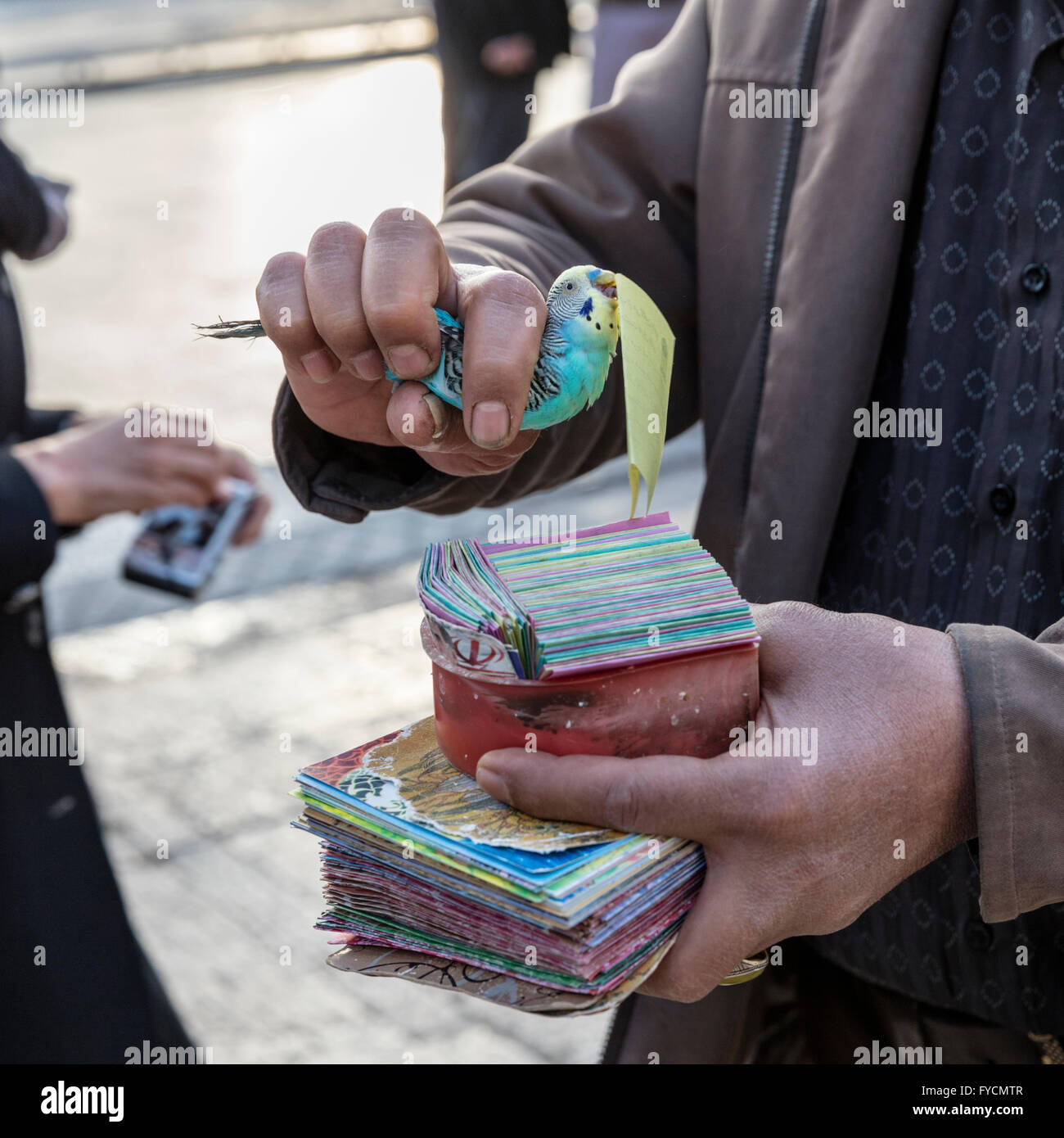 Handler & trained parakeet which is pulling a page with verse of Hafez's poetry from a stack outside Hafez's - Stock Image