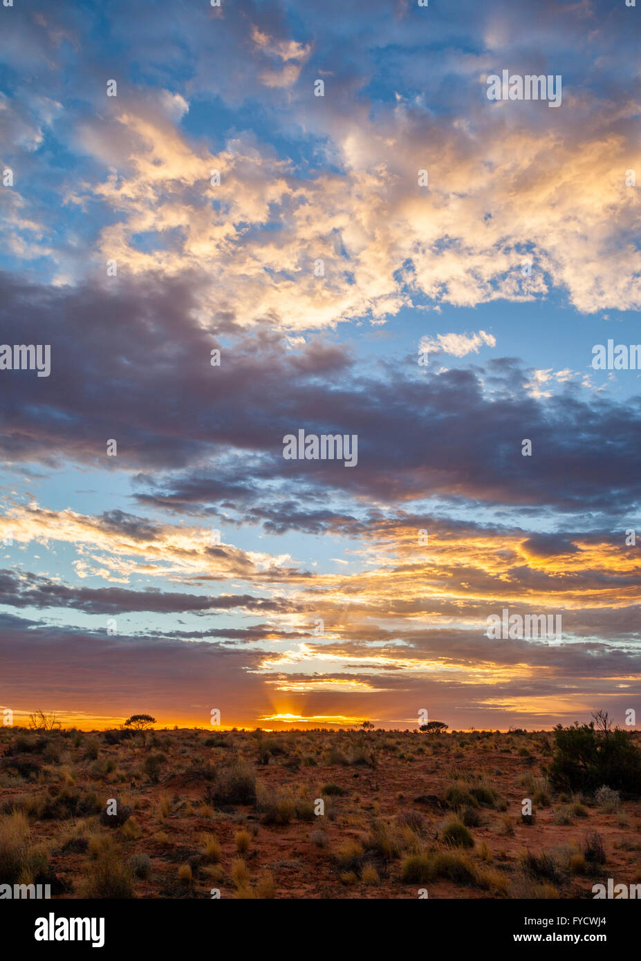 pre-sunrise glow over the Simpson Desert at Purni Bore, Witjira National Park, South Australia - Stock Image