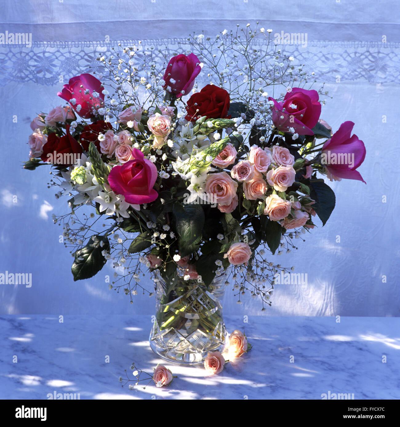 Varieties Of Pink Roses Stock Photos Varieties Of Pink Roses Stock