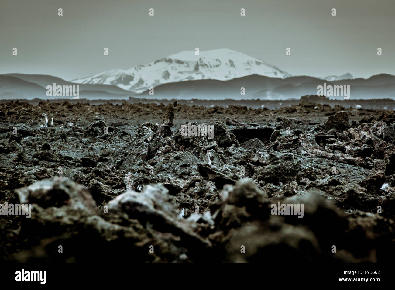 Holuhraun. Large lava field just north of the Vatnajökull ice cap, in the Icelandic Highlands, in Suð - Stock Image