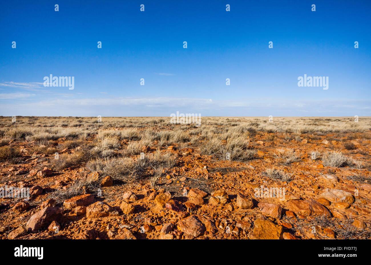 gibber plain with tough grasses on Hamilton Station, Oodnadatta-Eringa Road, South Australia - Stock Image