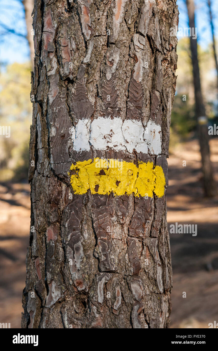 White and yellow marks of a Short Waymarked Path (PR) on the trunk of Aleppo Pine. Photo taken in Buendia, Cuenca, Stock Photo