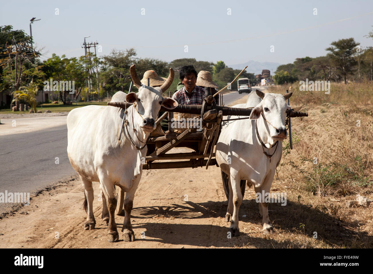 A Burmese family of small farmers with their hitching up (New Bagan - Myanmar). Famille Birmane et son attelage - Stock Image