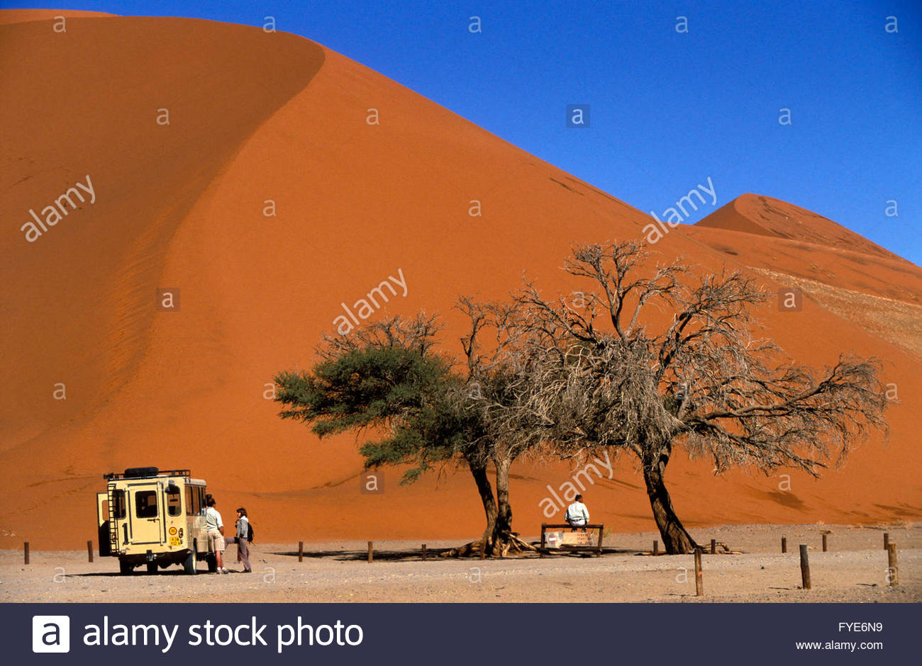 Trees and Sand Dunes in Namib Desert Namibia - Stock Image