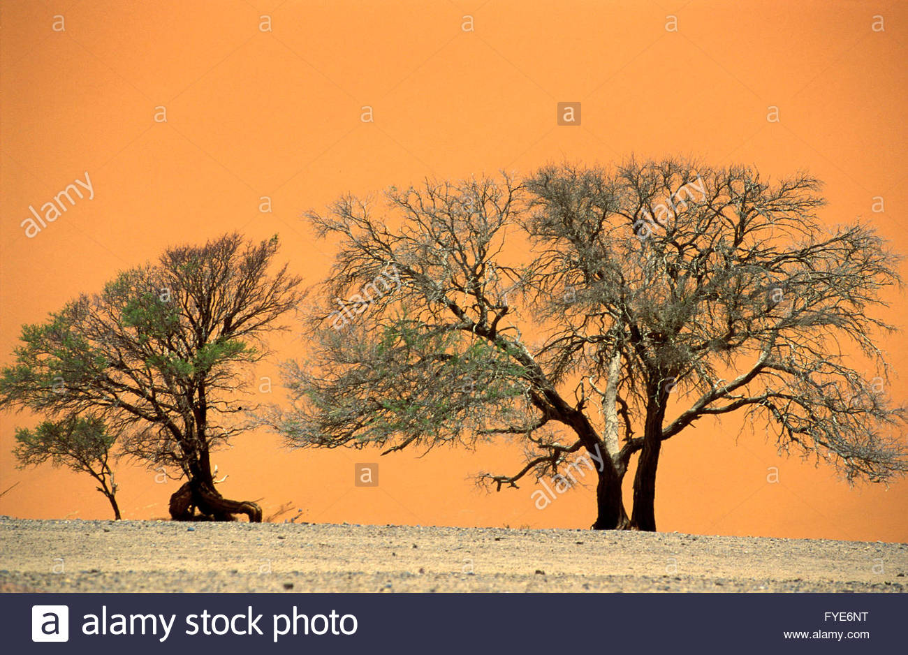 Dead Tree and Sand Dunes in Namib Desert Namibia - Stock Image