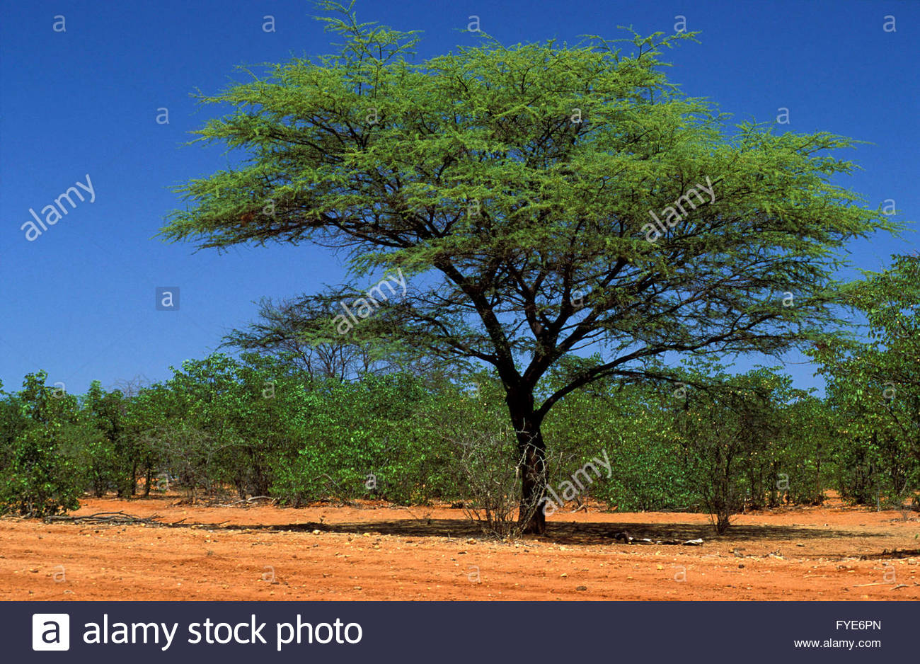 Landscape in the Kaokoland Namibia. - Stock Image