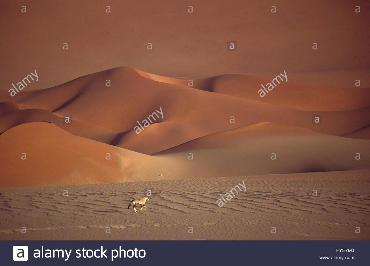 Oryx Antelope on Sossusvlei Sand Dune Namibia. - Stock Image