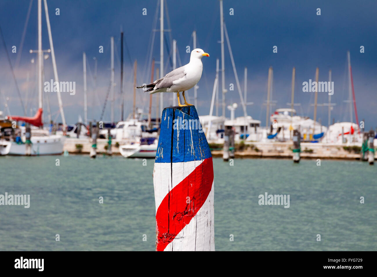 Seagull in the harbor, waiting on wooden stake, with approaching storm - Stock Image