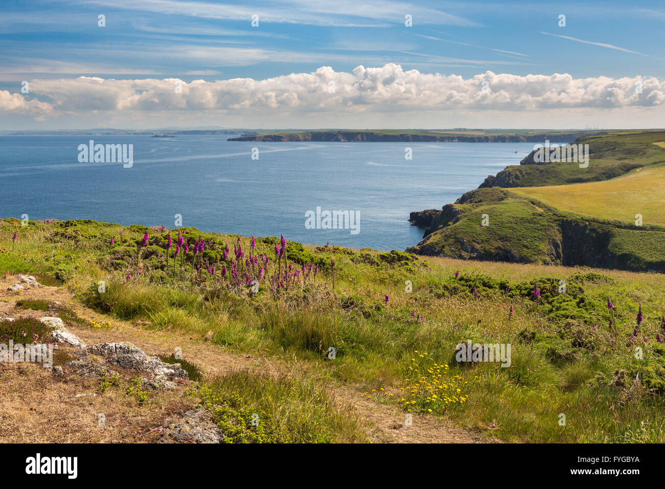 Deer Park near Martins Haven looking east - Pembrokeshire Stock Photo