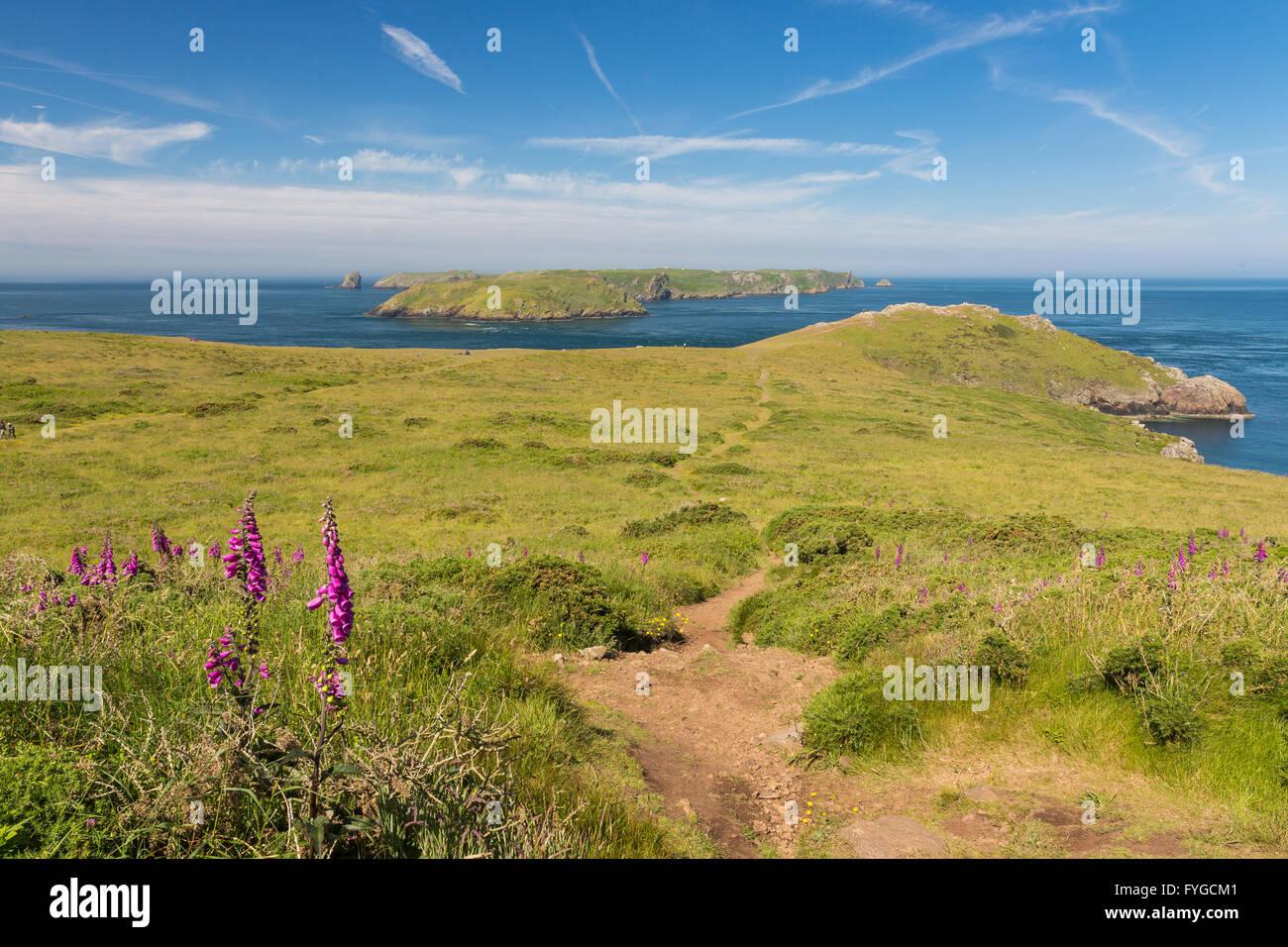 Deer Park near Martins Haven looking to Skomer - Pembrokeshire - Stock Image
