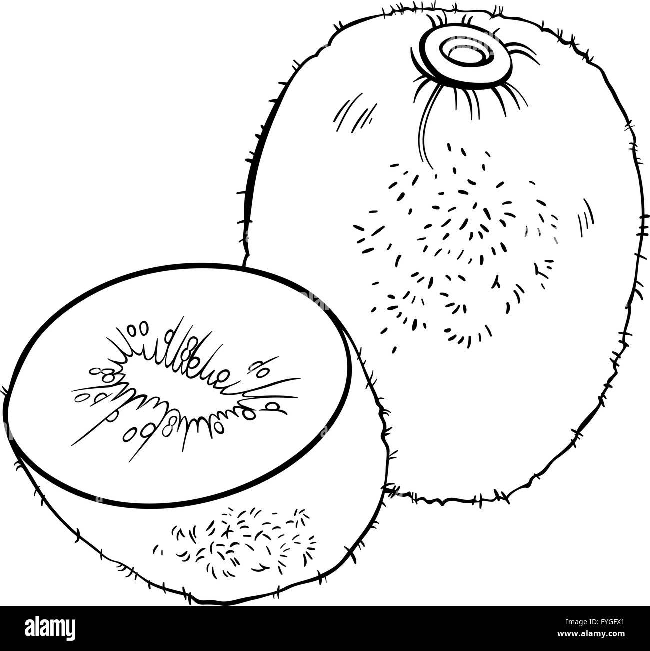 Kiwi fruit illustration for coloring book
