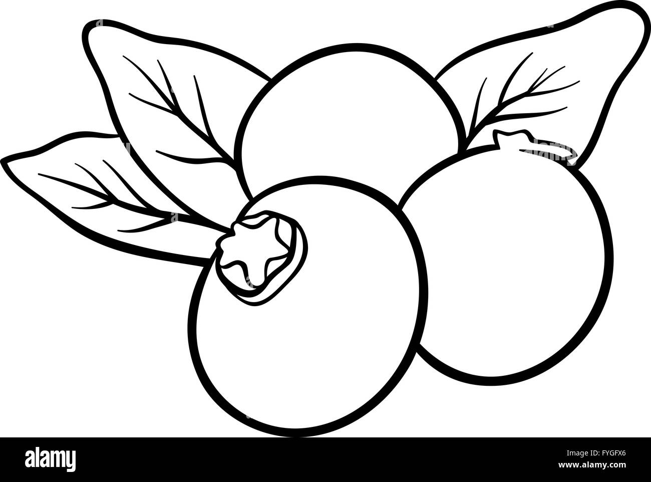 Blueberry Fruits For Coloring Book