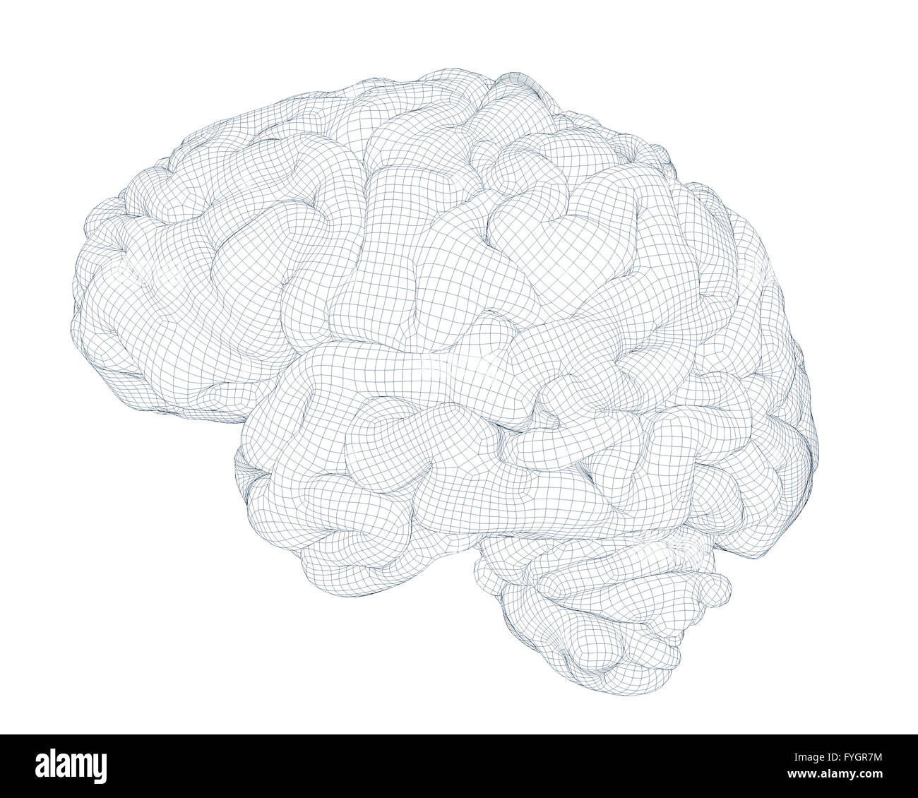 brain isolated wireframe 3d generated - Stock Image
