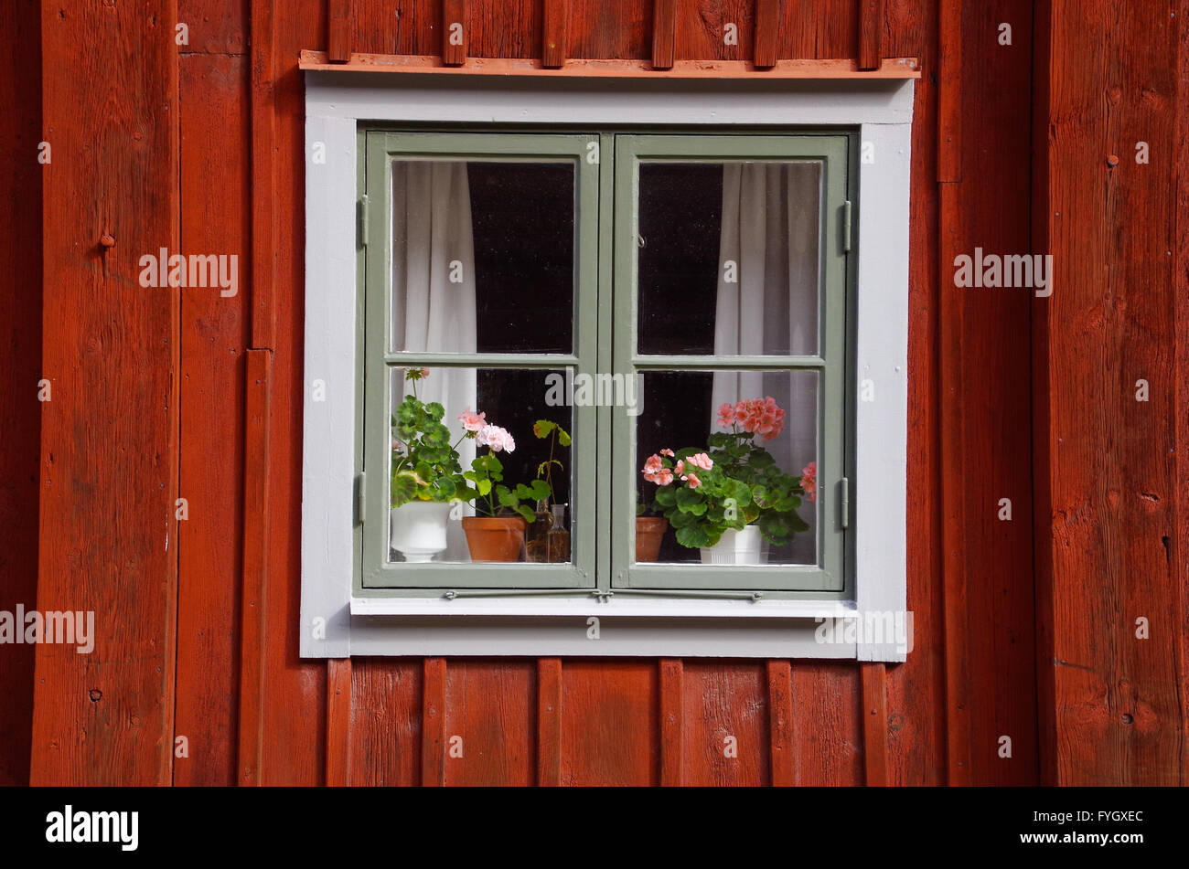 Square window with flowers on the sill in Gamla Linköping, Sweden - Stock Image