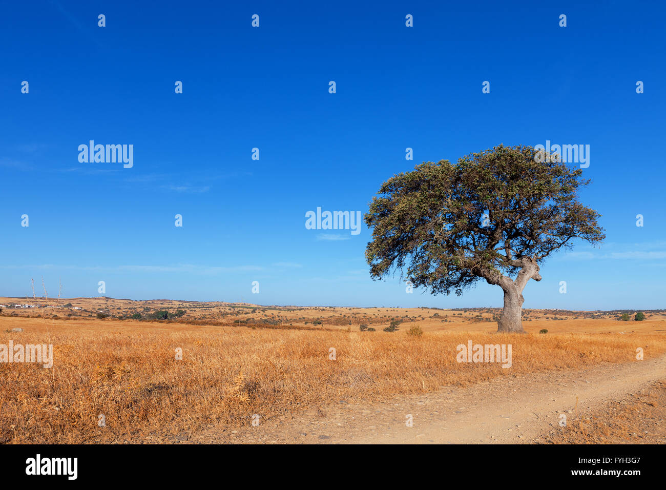 Single tree in a wheat field on a background of blue sky - Stock Image