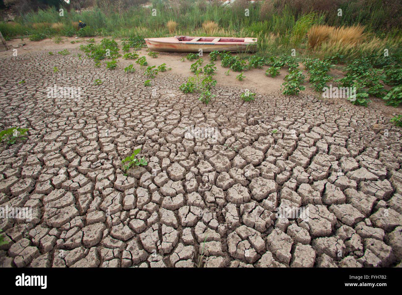 environmental concept, Water shortage and drought Dry cracked mud - Stock Image