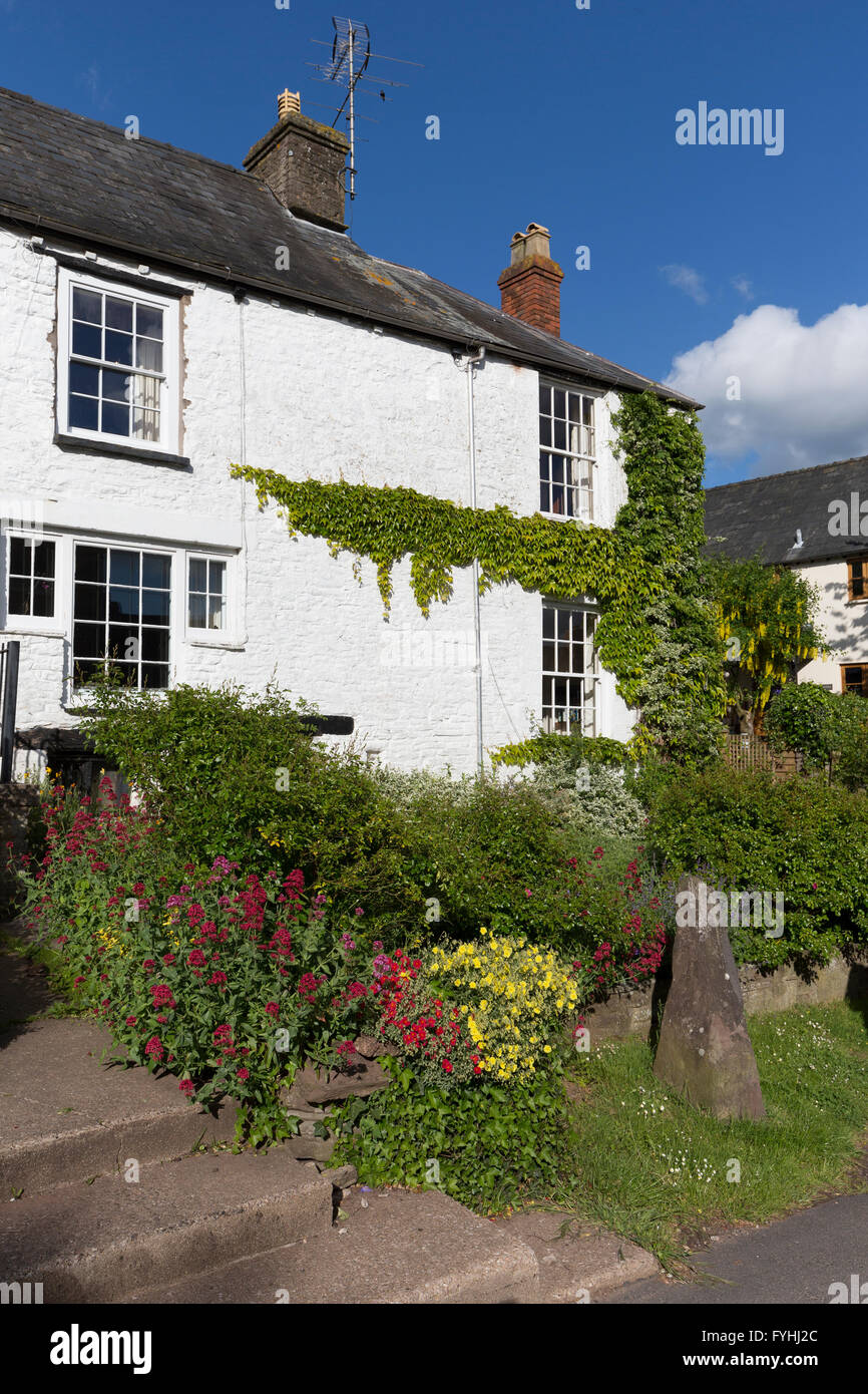 House with garden and creeper on wall, Grosmont, Monmouthshire, Wales, UK - Stock Image