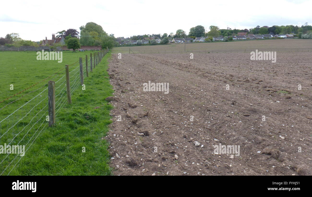 Arable tilled ploughed bare field and field margin Cheshire uk - Stock Image