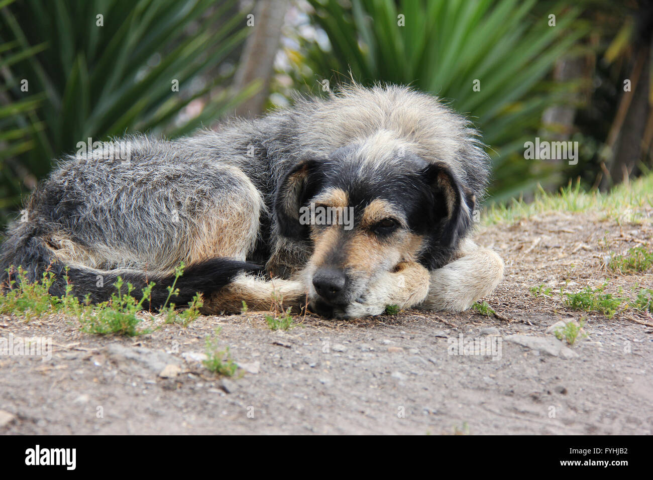 Abandoned dog at Zipaquirá - Stock Image