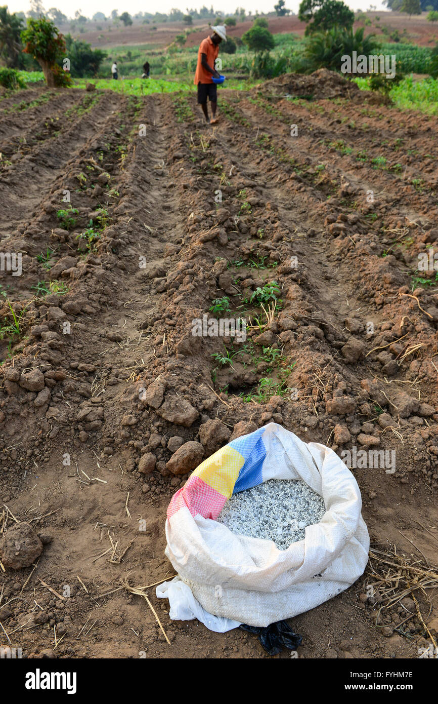 MALAWI, Thyolo, village Samuti, Farmer applies synthetic fertilizer in vegetable field, the Malawi government has - Stock Image