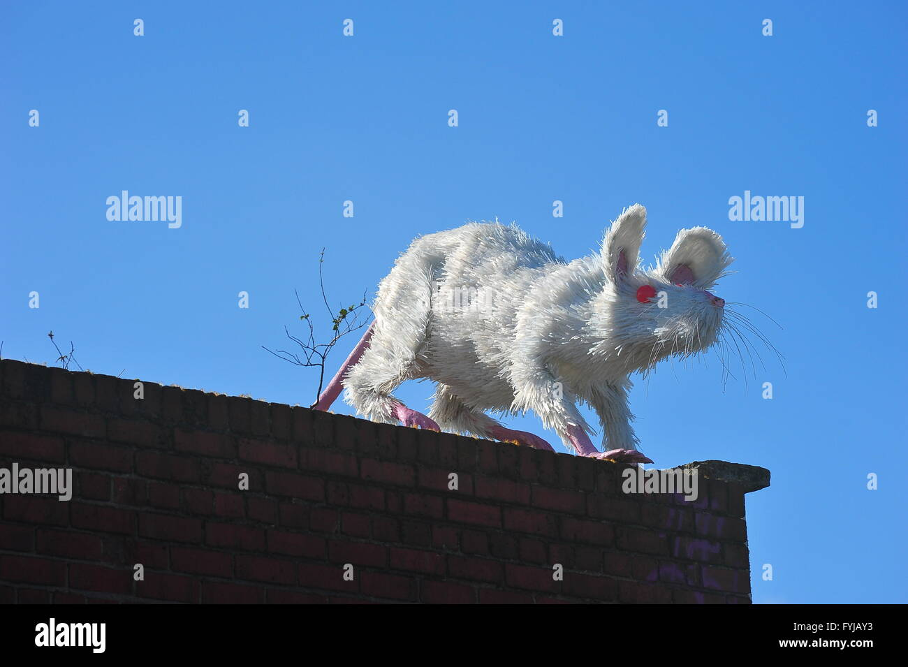 Giant white rat made from recycled plastic bottles on display in Liverpool city center. - Stock Image