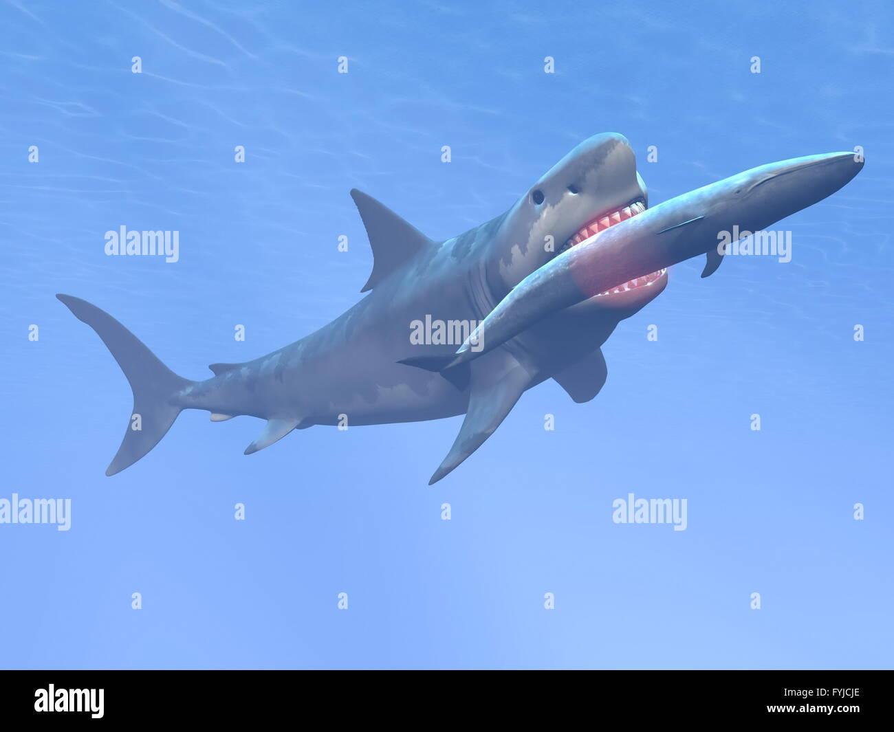 Megalodon shark eating blue whale - 3D render Stock Photo: 103052614 - Alamy