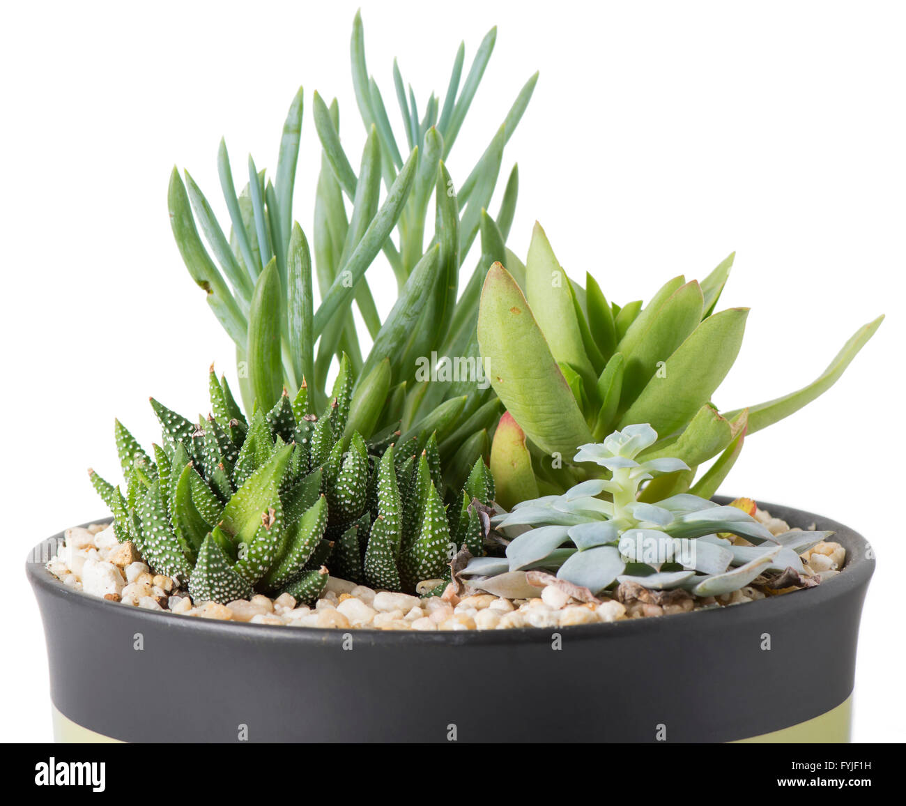 Interior Garden Plants Indoor Plant Garden With Succulent Plants In A Pot With