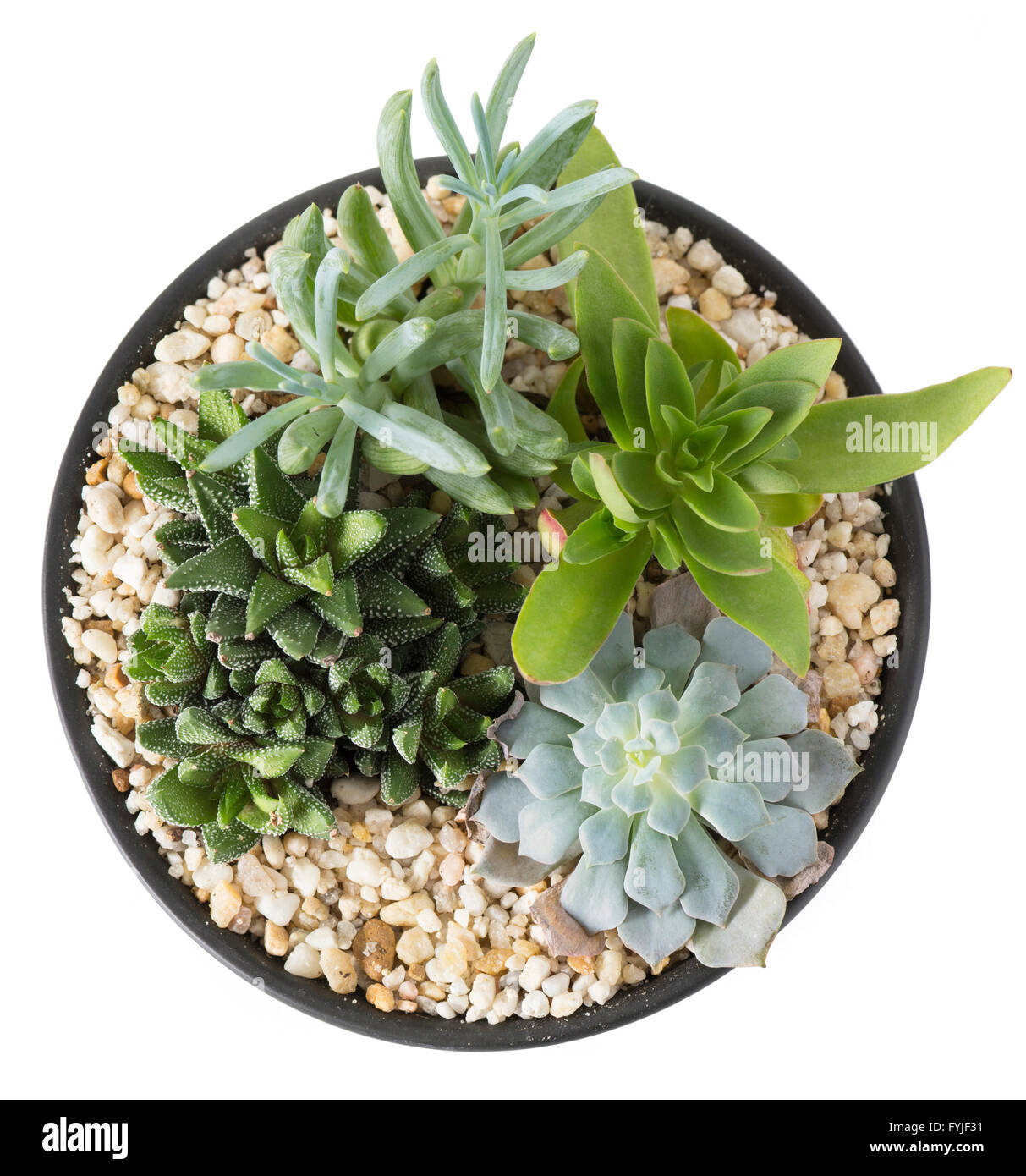 Overhead view of an indoor plant garden with succulent