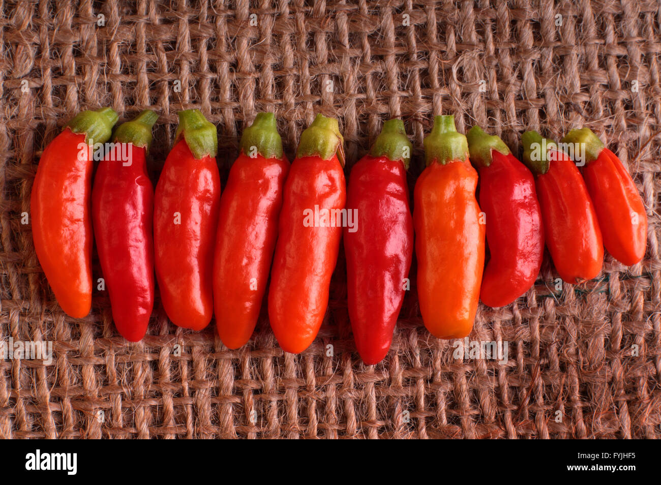 Line of red Peri Peri chili peppers on a Hessian background. - Stock Image