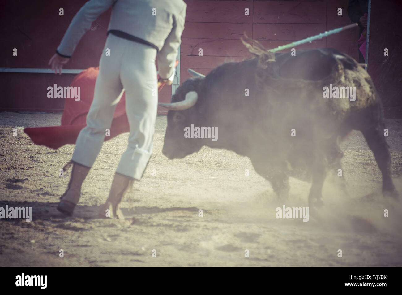 spectacle of bullfighting, where a bull fighting a bullfighter Spanish tradition - Stock Image