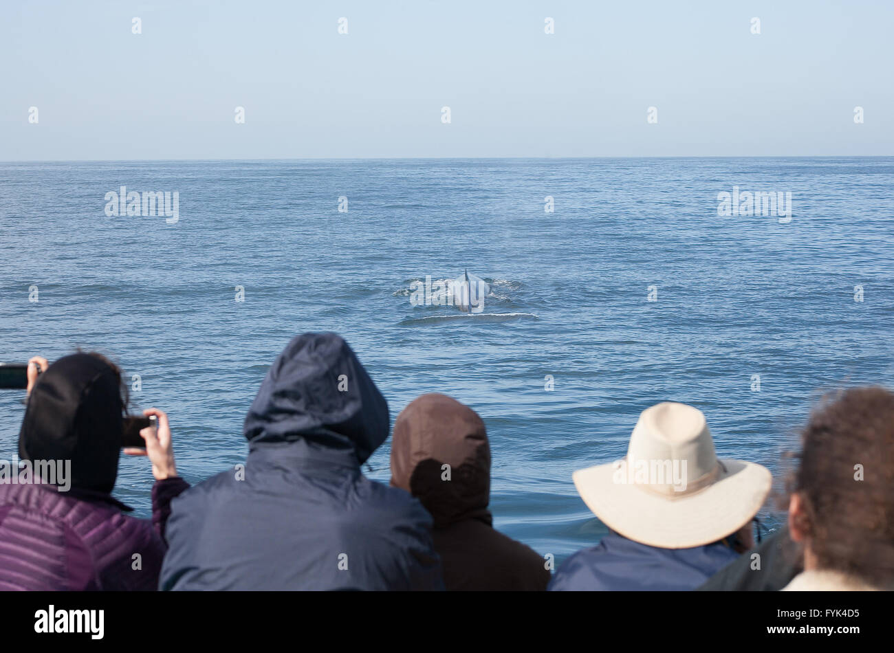On a whale watching cruise in Long Beach, a whale appears as onlookers take photographs with their cell phones. - Stock Image