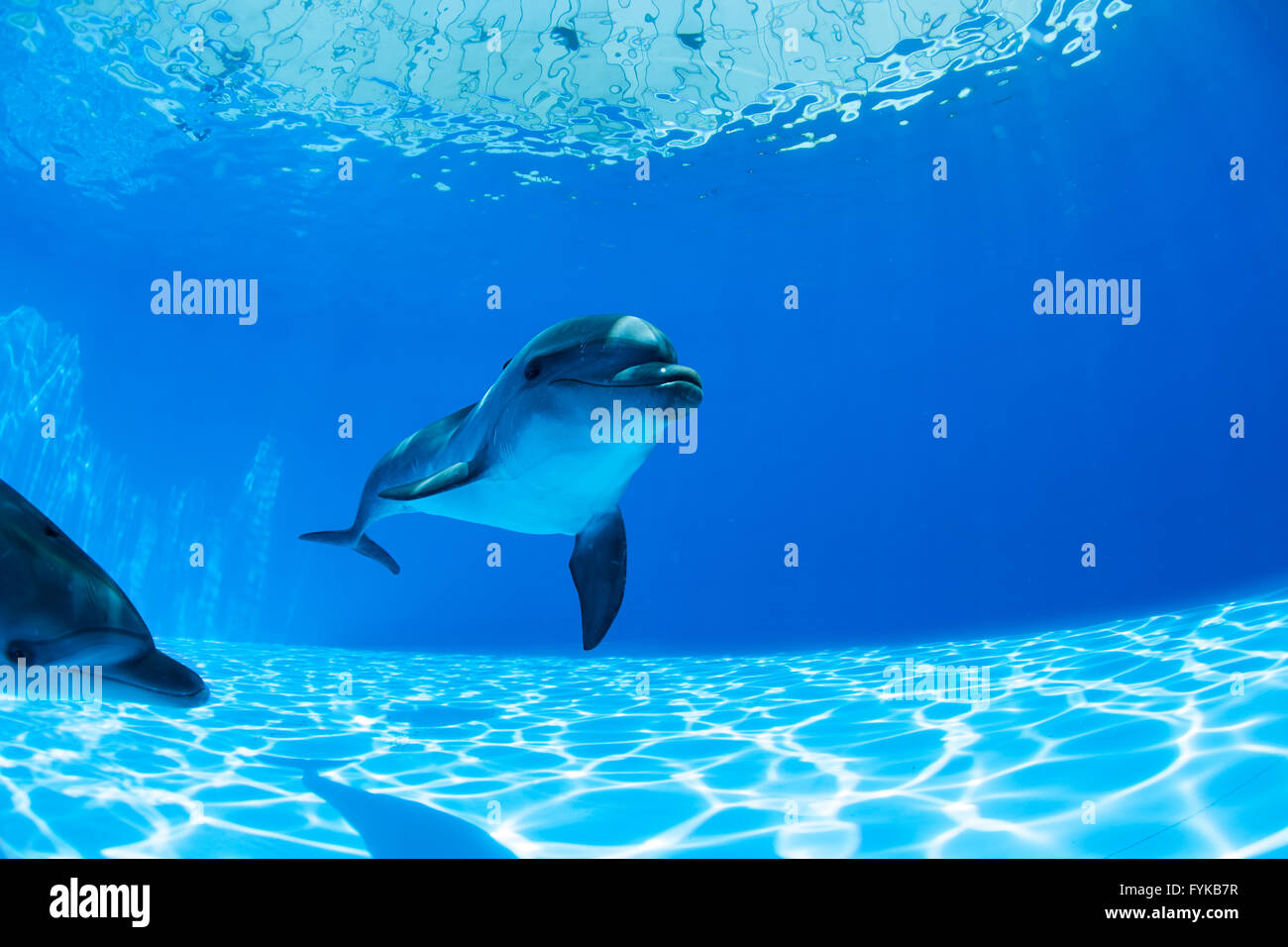 Dolphins couple - Stock Image