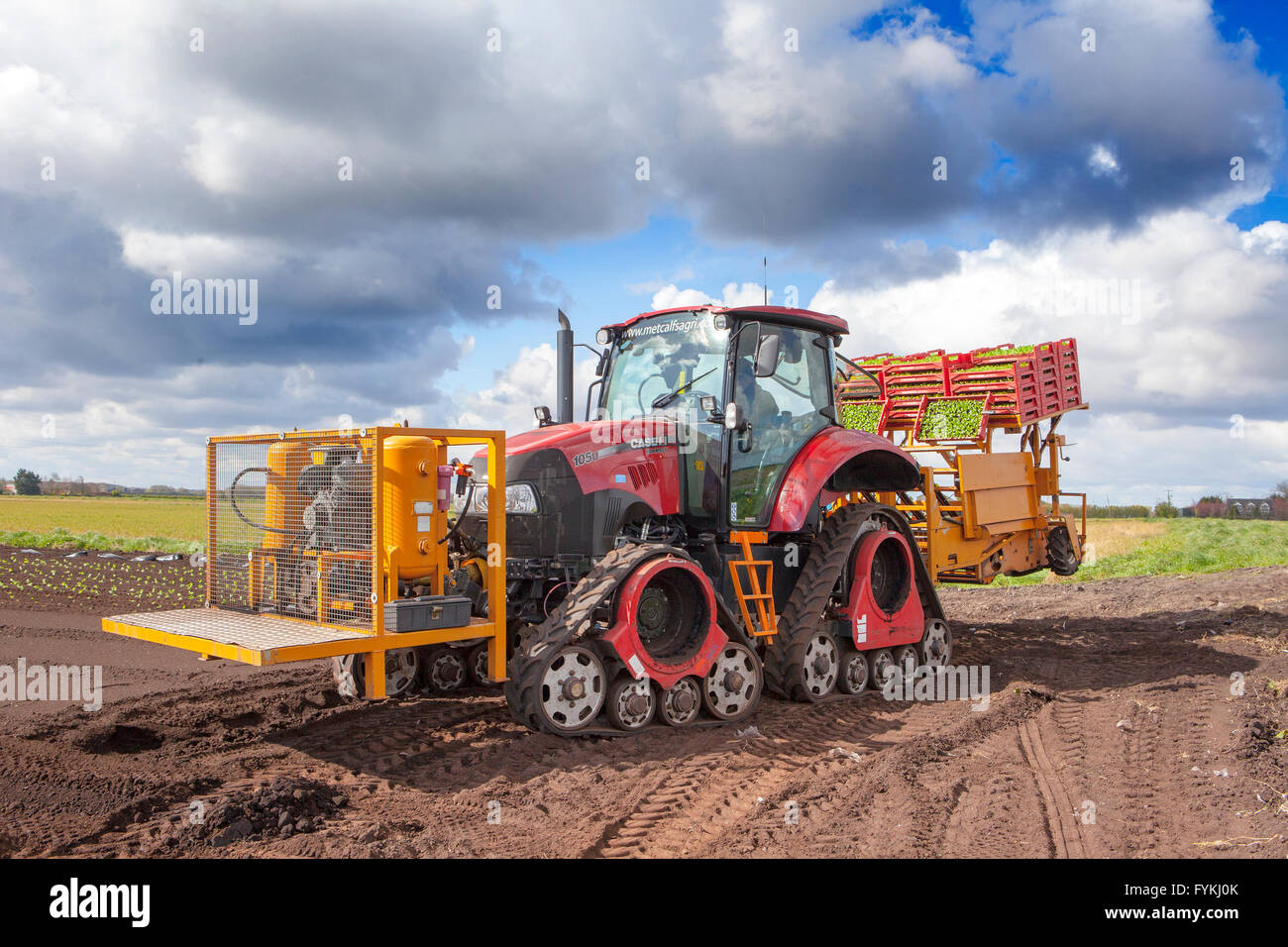 Hesketh Bank, Lancashire, UK. 27th April 2016. UK Weather:  Farmers in the salad bowl of Lancashire are held back - Stock Image