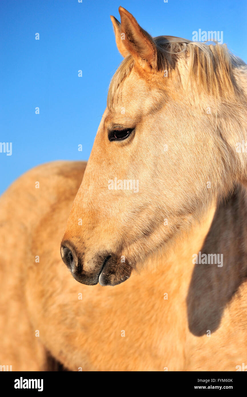 Closeup horse portrait on the sky background Stock Photo
