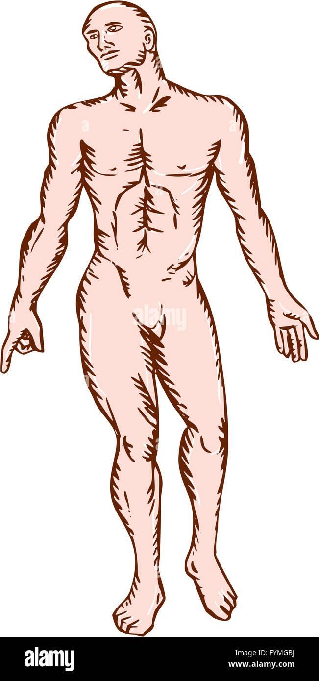 Gross Anatomy Stock Photos & Gross Anatomy Stock Images - Alamy