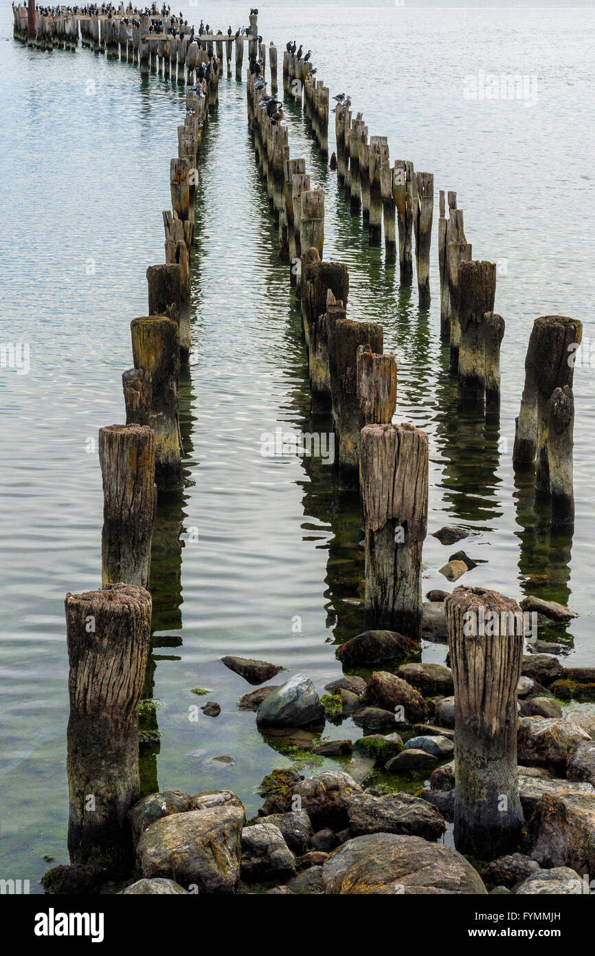 Wooden pier pillars, Puerto Natales, Patagonia, Chile - Stock Image
