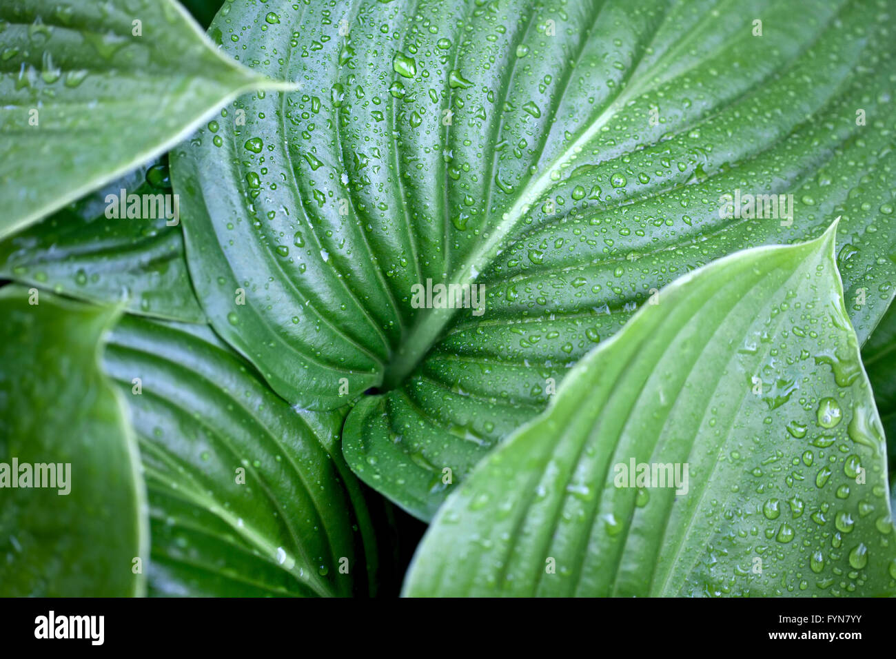 Large Leaves Plants Stock Photos Images