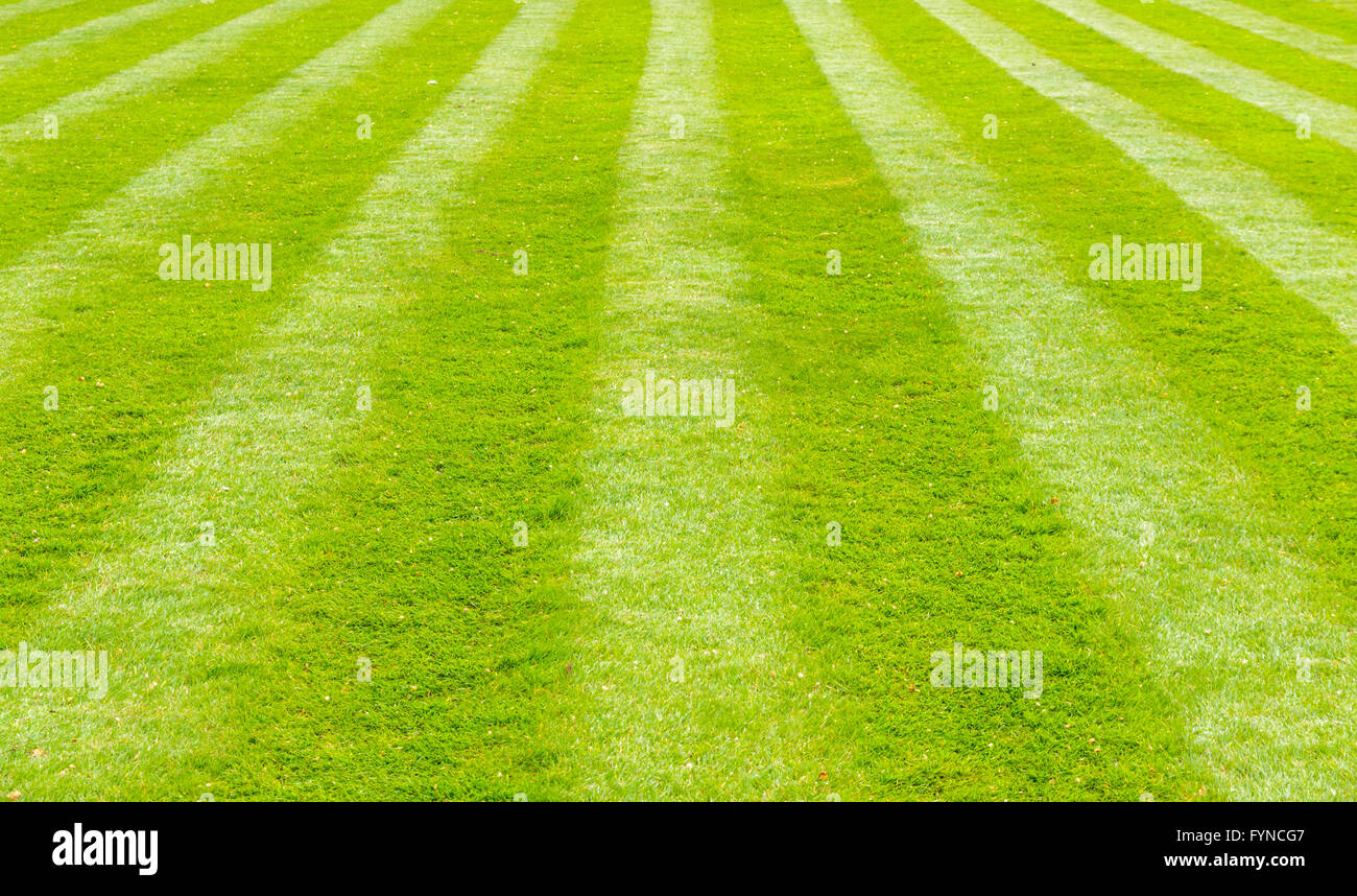 A beautiful green garden lawn that has just been mowed with an attractive pattern of stripes and checks - Stock Image